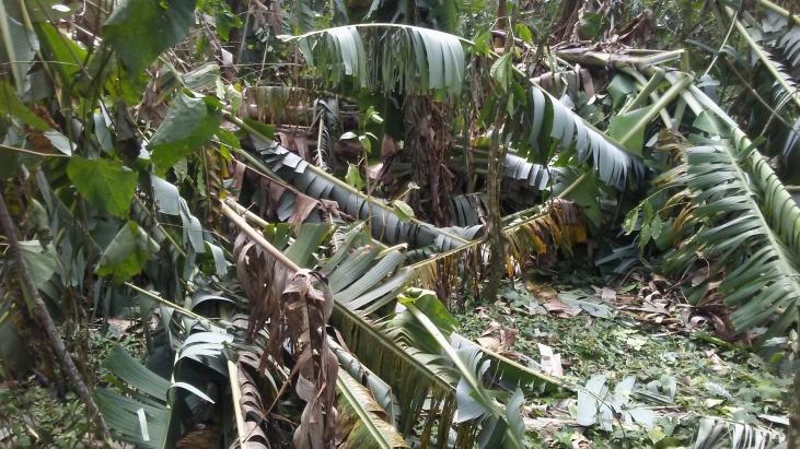 AVSF en Haiti : identifier les besoins réels pour une intervention d'urgence ciblée et efficace