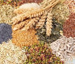 """La Loi """"Biodiversité"""" est une victoire pour la biodiversité des semences cultivées"""