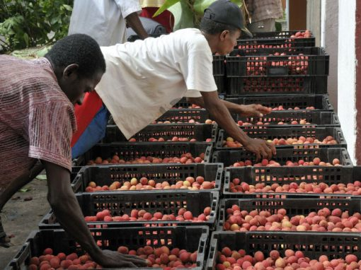 AVSF : un commerce équitable à Madagascar