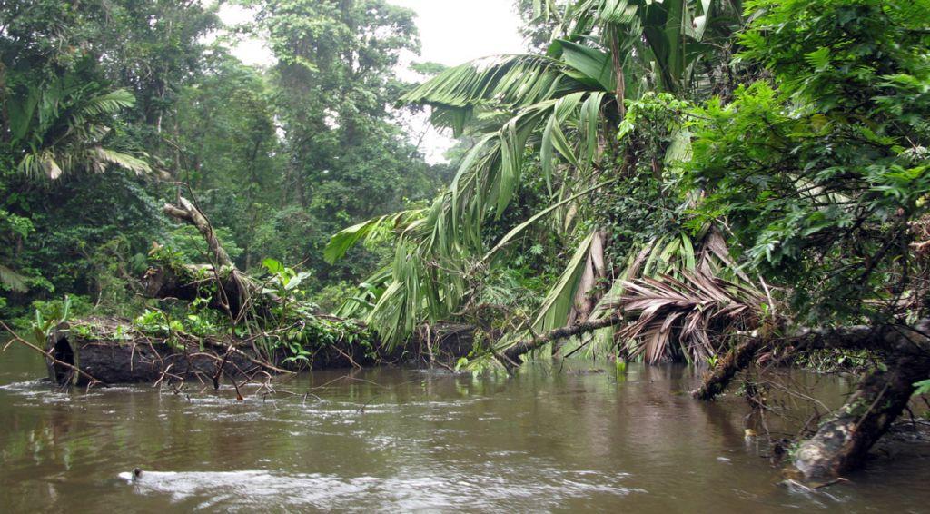 La déforestation favorise l'émergence de nouvelles maladies infectieuses