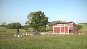 EN LIGNE / Projection AlimenTERRE : Pauvres poulets: Géopolitique de l'œuf @ Imagotv.fr